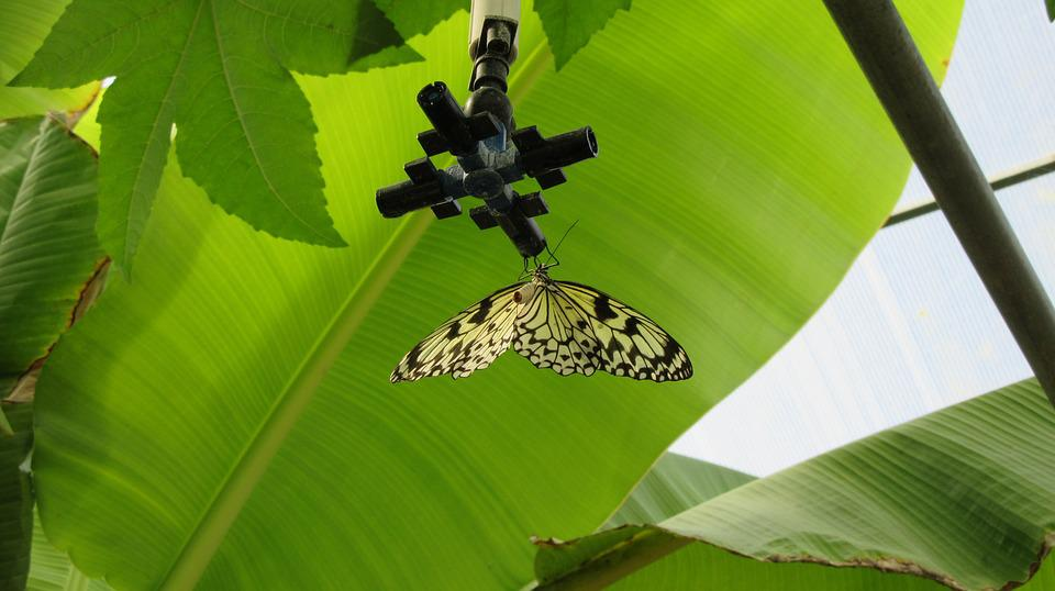 Provence, Velleron, Butterfly, South Of France Nature