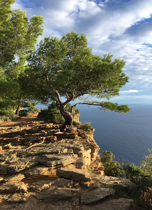 Sea, South Of France, Tree, Steep, Stones, Hold Tight