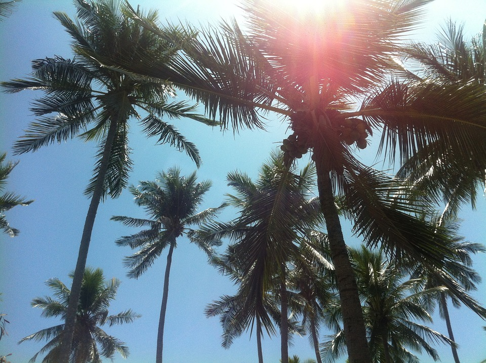 Palm Trees, Beach, Thailand, South Sea