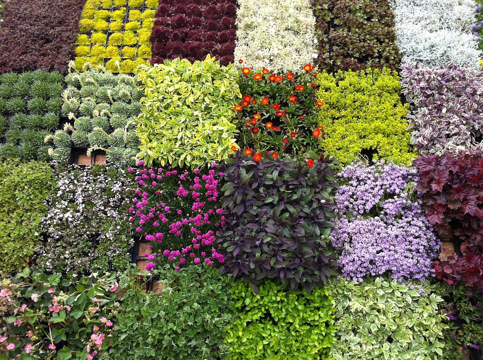Flowers, Market, Spring, Flowers Was, South Tyrol