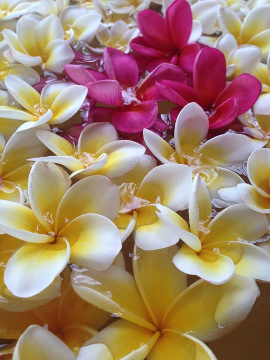 Southern Countries, Flowers, Vivid