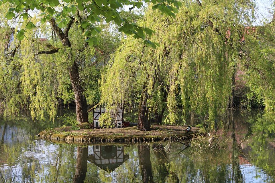 Duck Pond, Spa Garden, Duck, Summer, Mirror Image