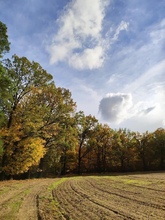 Field, Sky, Spacer, Landscape, Clouds, Plowed
