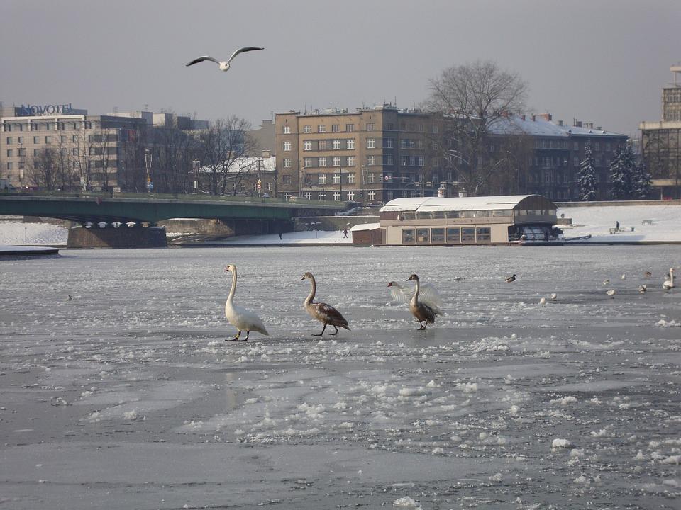 Winter, River, Ice, Frozen River, Water Birds, Spacer
