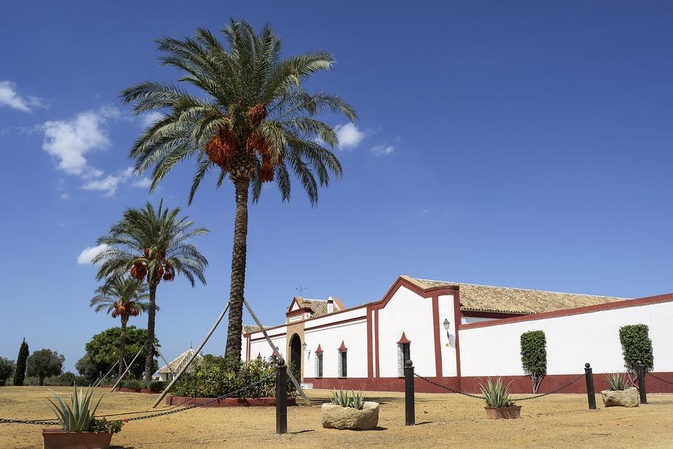 Sevilla, Polo, Stables, Spain, Palm Tree