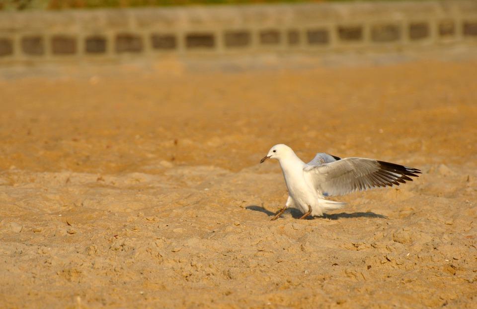 Bird, Beach, Birds, Creature, Flying, Fly, Sparrow
