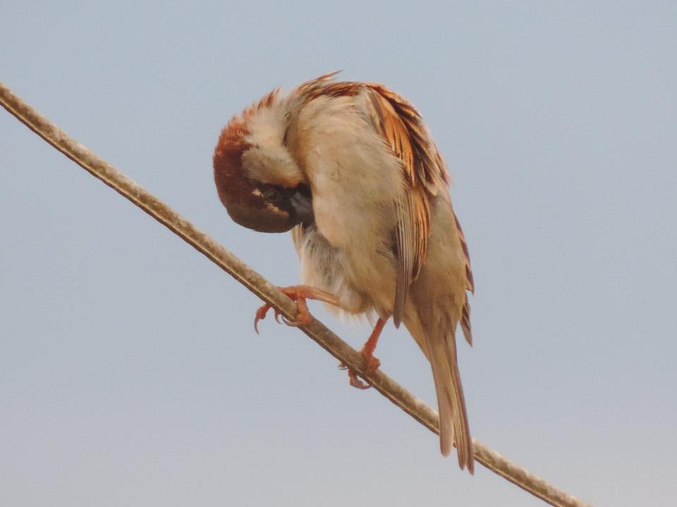 Sparrow, Bird, Light Wire