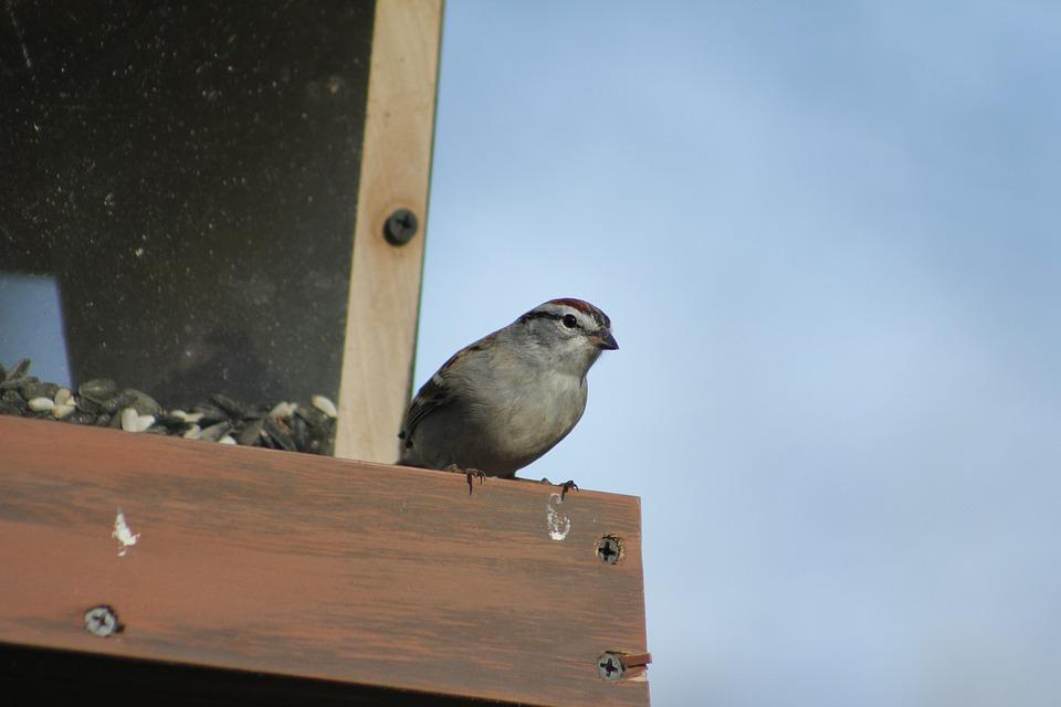 Outdoors, Bird, Nature, Wildlife, Bird Feeder, Sparrow