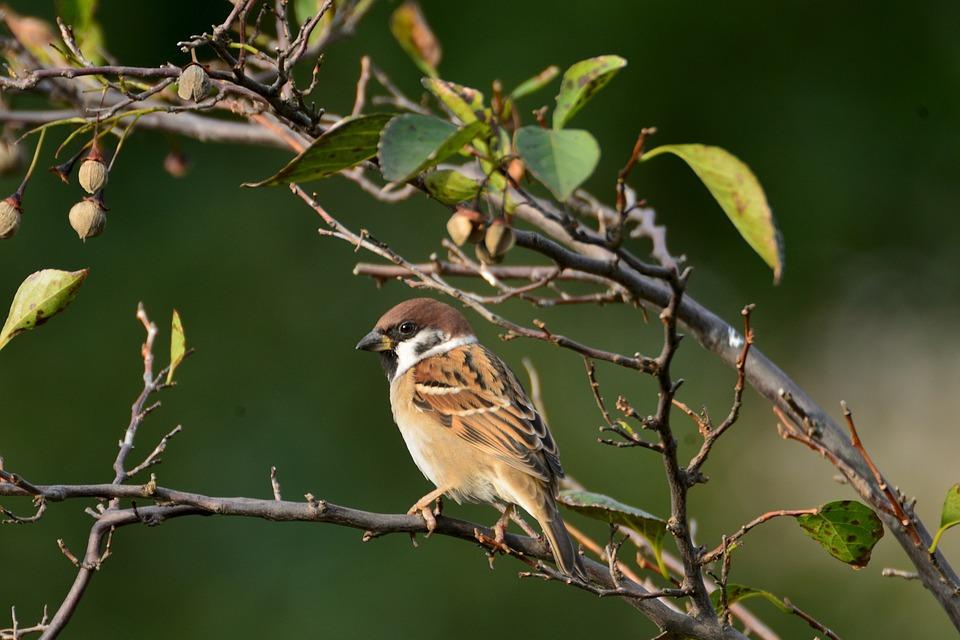 Natural, Bird, Wild Animals, Outdoors, Wood, Sparrow