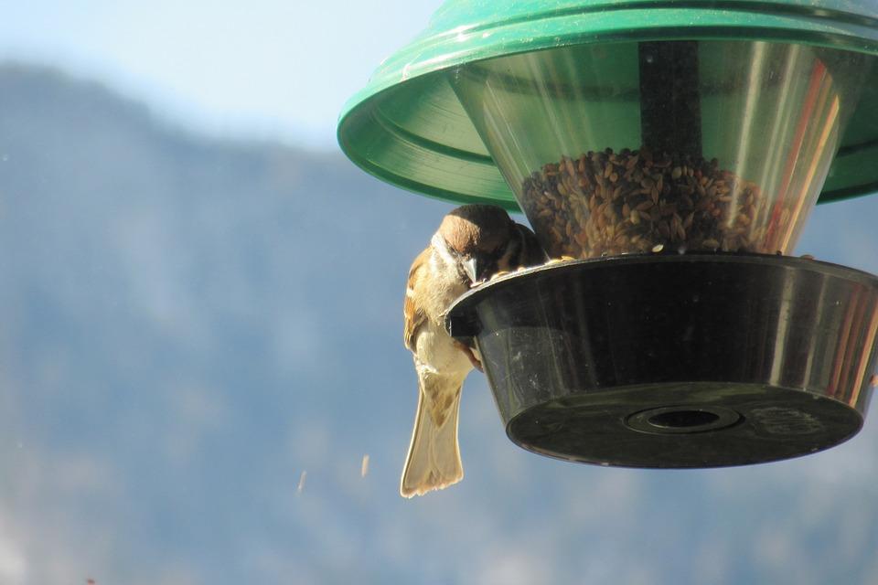 Sparrow, Bird Feeders, Sperling, Passer Domesticus