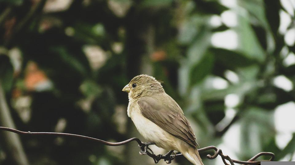 Sparrow, Perched, Small Bird, Sparrow Perched On A Wire