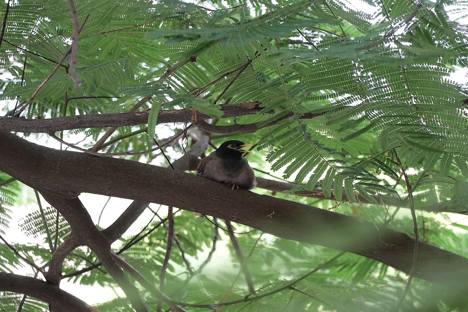 Sparrow Pregnant, Sparrow, Tree, Nature, Spring