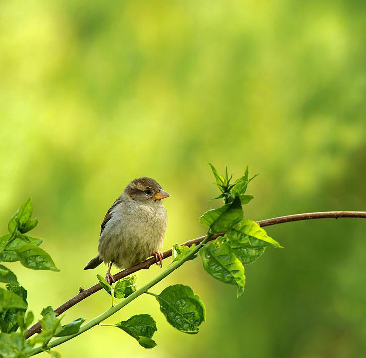 Animal World, Bird, Nature, Songbird, Sparrow, Garden