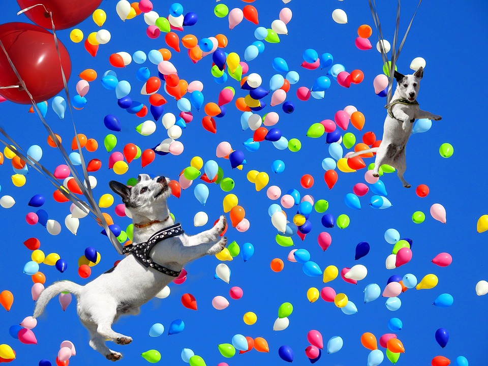 Spassfototo, Dog, Balloons, Colorful, Colorful Balloons