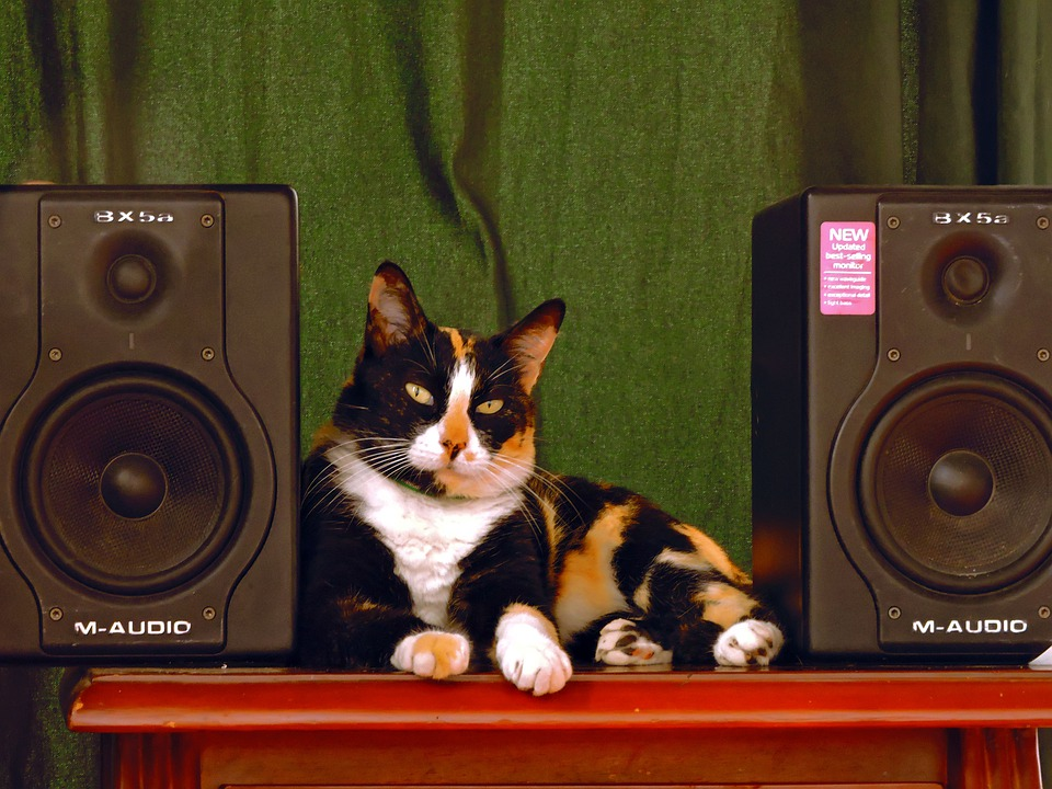 Cat, Music, Baffle, Baffles, Feline, Speakers