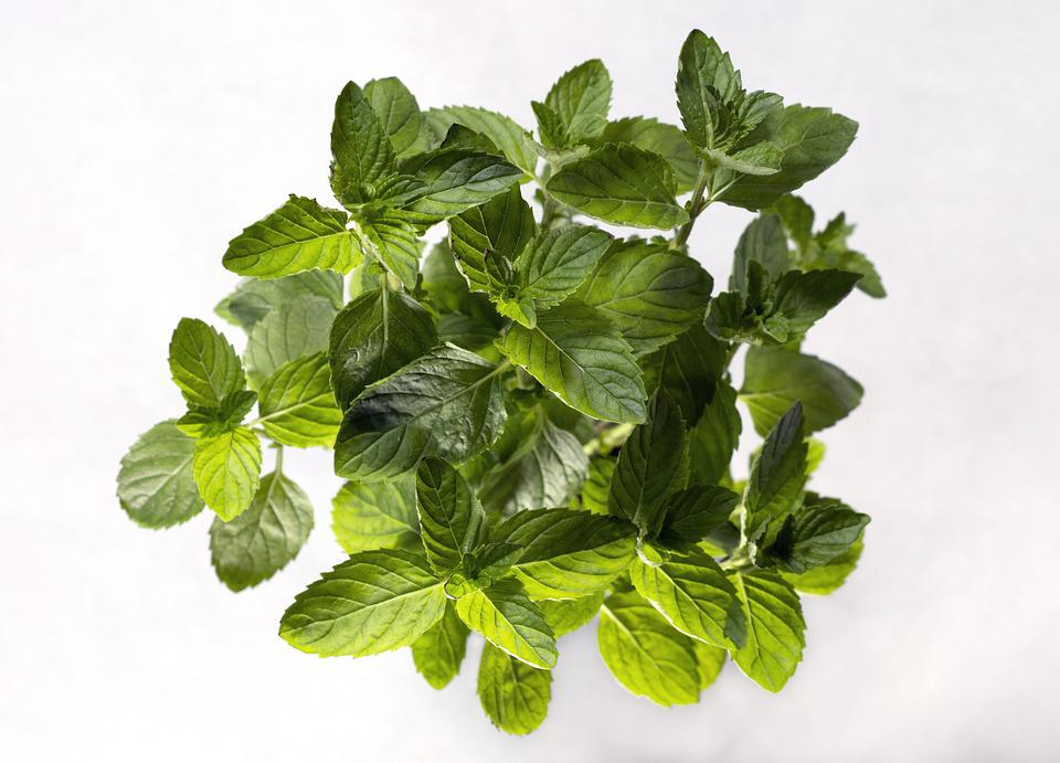 Plant, Spearmint, Leaf, Leaves, Green, Aerial, Nature