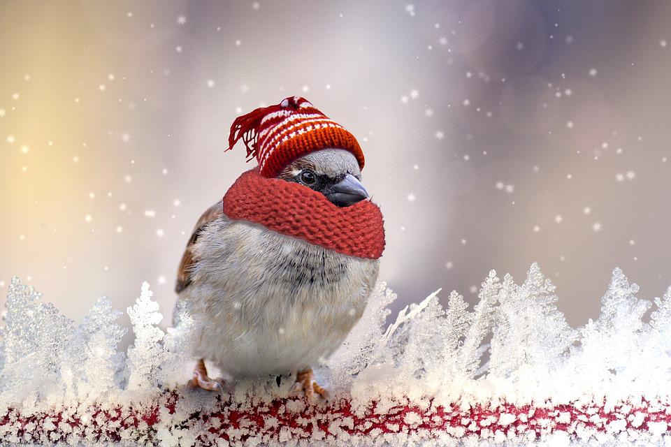 Sparrow, Winter, Feather, Cold, Sperling, Plumage, Snow