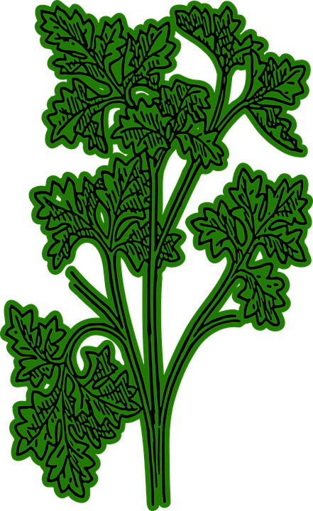 Parsley, Green, Spice, French Parsley, Plant, Garden