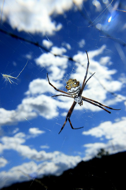 Spider, Arachnid, Predator
