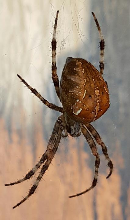 Spider, Animal World, Close, Nature