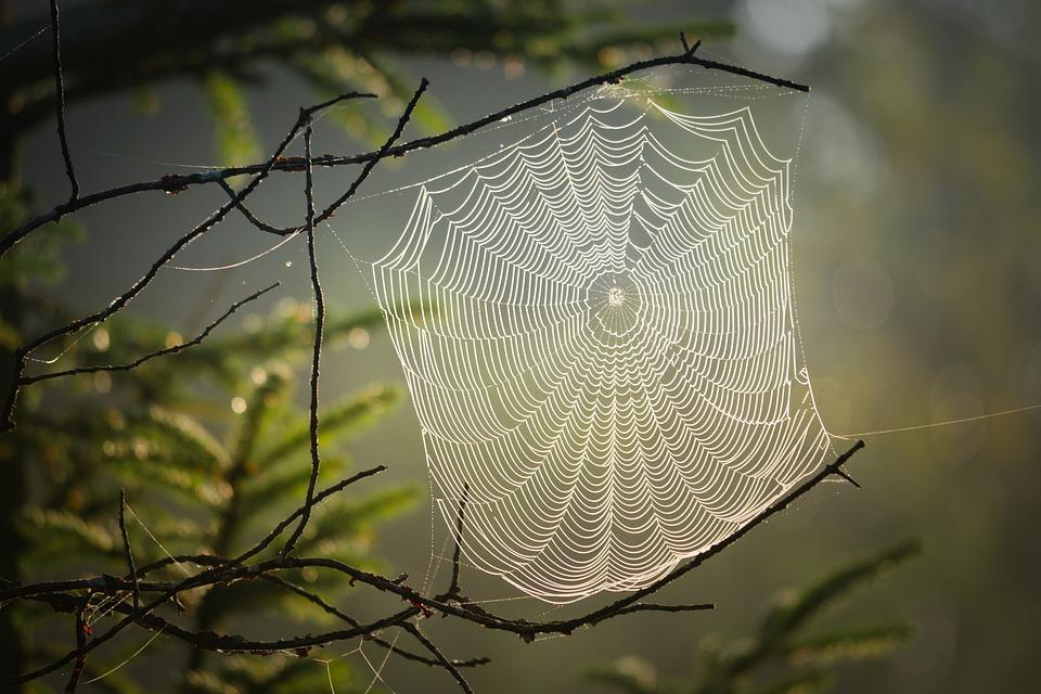Cobweb, Spider, Insect, Nature, Web, Creepy, Case