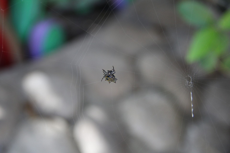 Spider, Insect, Danger, Animals, Small, Animal, Nature