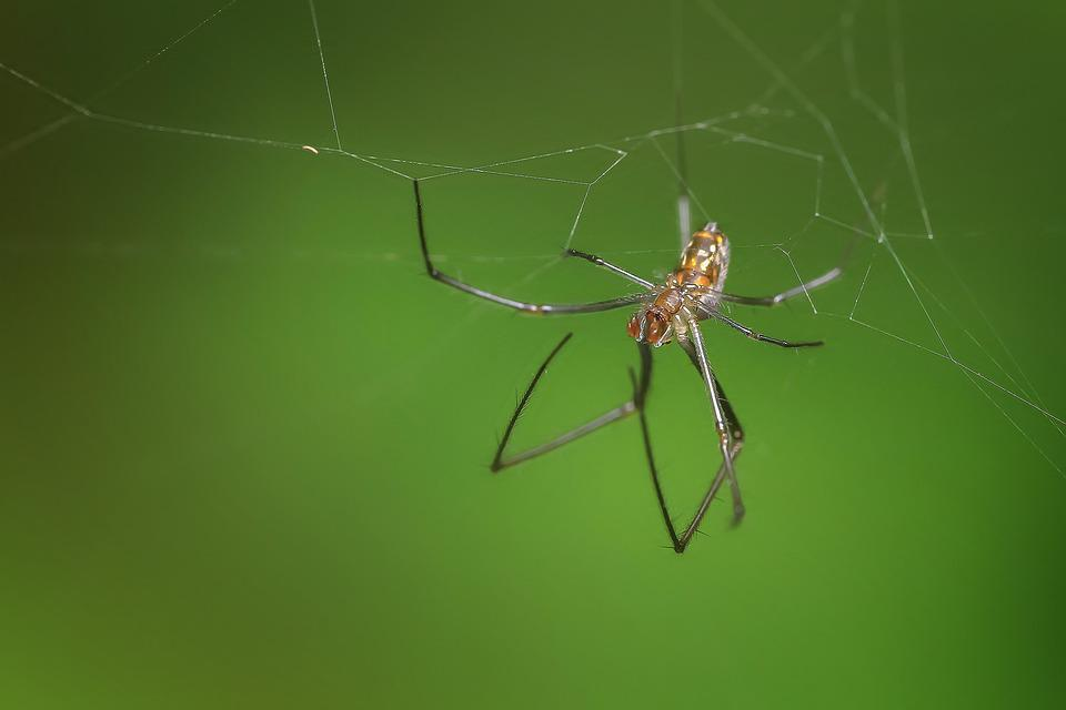 Spider, Insect, Macro, Animal, Wildlife