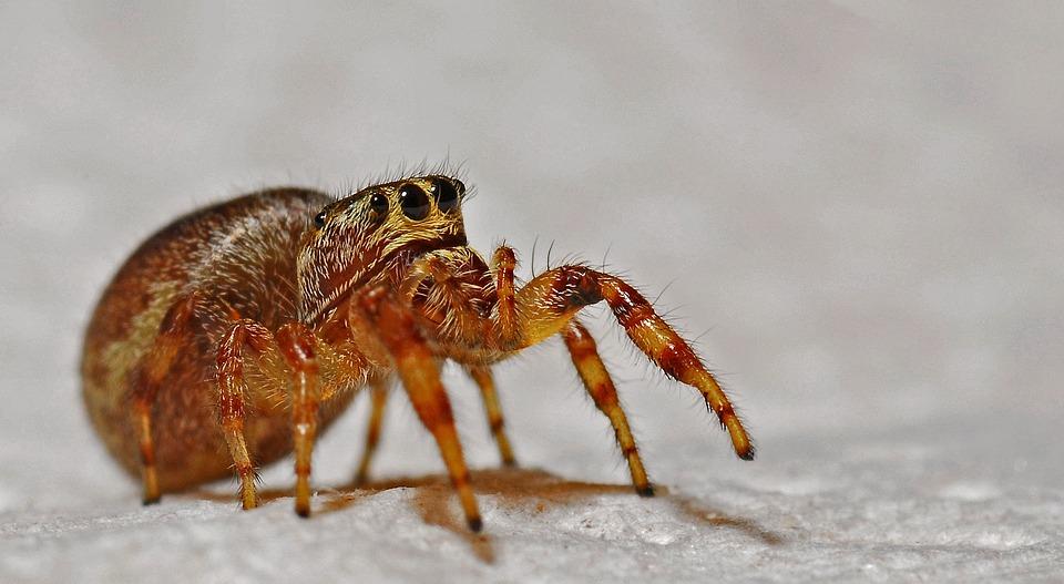 Spider, Arachnid, Macro, Insect, Animal, Nature