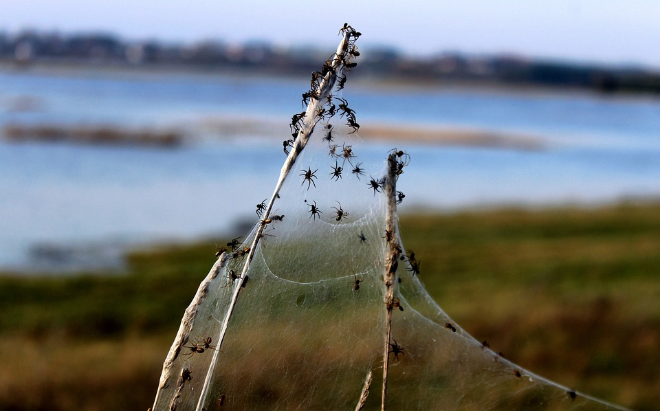 Spider, Spiders, Meadow, Grass, Cobweb, Spider Meadow