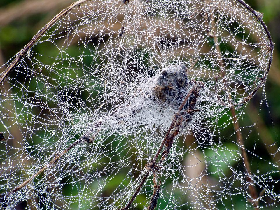 Canvas, Spider, Drops, Water, Dew, Nature, Forest