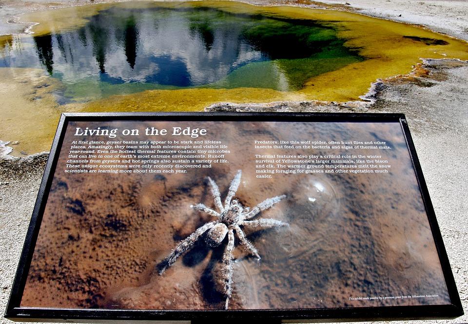 Spider, Sign, Landscape, Water