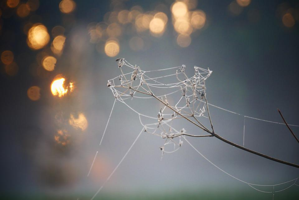 Spider Web, Plant, Sunset, Sunrise, Bokeh, Web, Cobweb