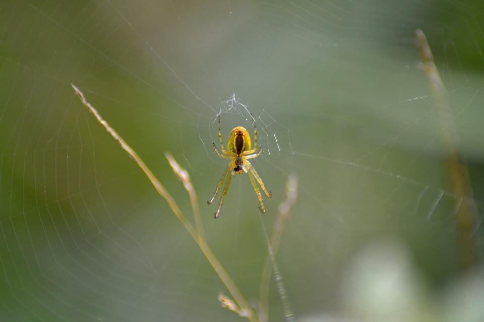 Network, Spider Web, Strained Networks, Cobweb, Close