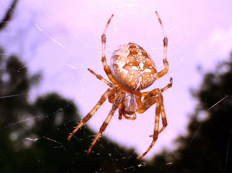 Spider, Arachnid, Spider's Web, Insect, Phobia