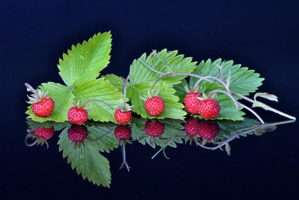 Fruit Fruits, Spiegelug, Experiments, Photo Art