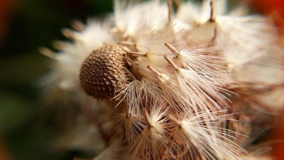 Nature, Seed, Closeup, Flora, Sharp, Summer, Spike
