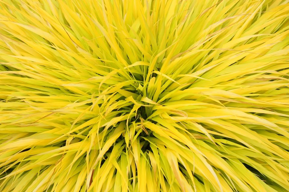Grass, Brush, Landscape, Yellow, Spike, Leaf, Nature