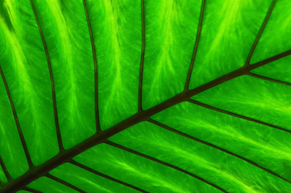 Green, Leaf, Spine, Plant, Green Leaves, Foliage