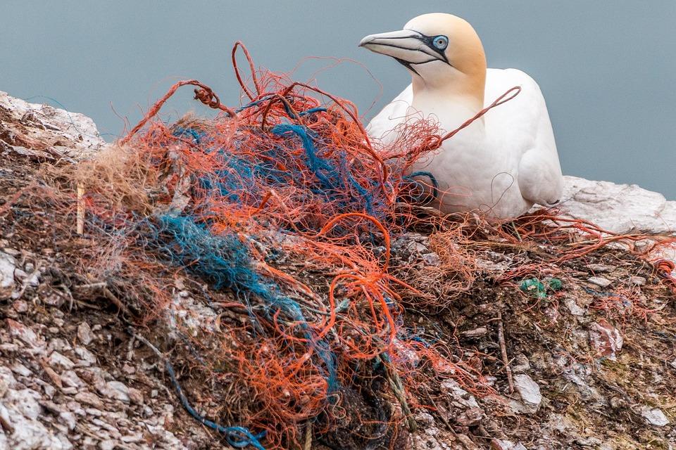 Safety Net, Spirit Network, Plastic Waste