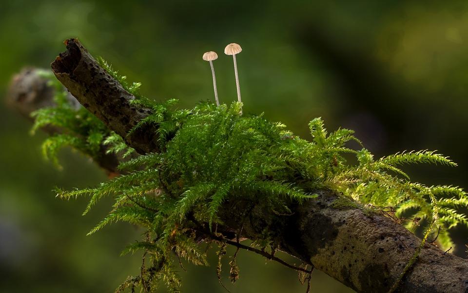 Mushroom, Moss, Mini Mushroom, Sponge, Tree Stump