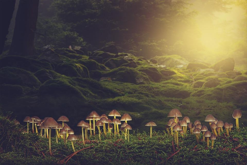 Mushrooms, Forest, Moss, Wild Mushrooms, Spore, Sponge