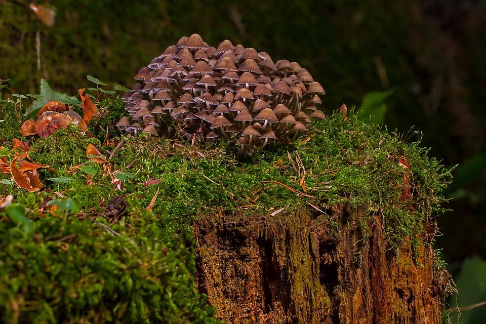 Mushroom, Mushrooms, Sponge, Agaric, Small Mushroom