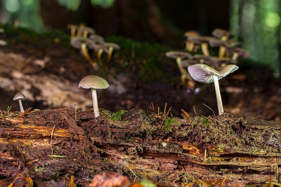 Mushroom, Wood Fungus, Small Mushroom, Sponge