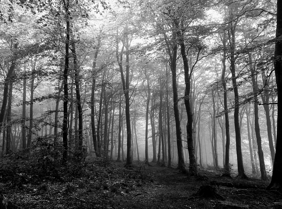 Free Photo Spooky Forest Leaves Black Wood White Trees Max Pixel