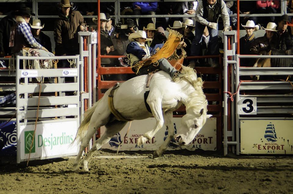Contest, Livestock, Rodeo, Cavalry, Stadium, Sport