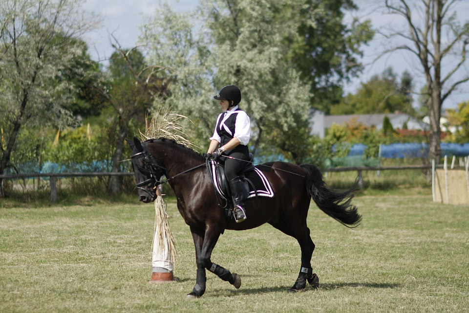 Ride, Equestrian, Dressage, Woman, Horse, Sport