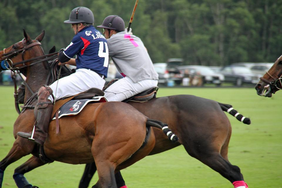Polo, Players, Horses, Sport, Competition, Game