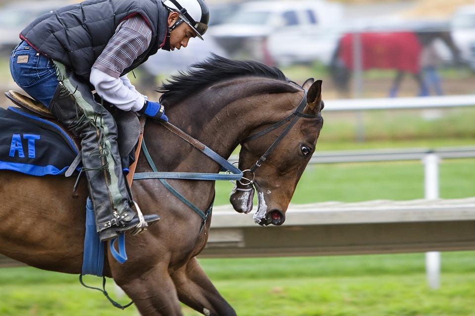 Racehorse, Horse, Race Course, Sport, Competition
