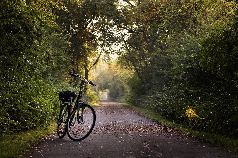 Bike, Trail, Bicycle, Sport, Ride, Exercise, Recreation