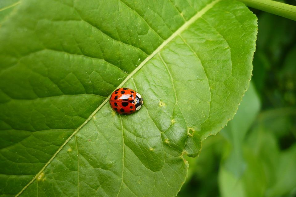 Ladybug, Red, Green, Lucky Charm, Spotted